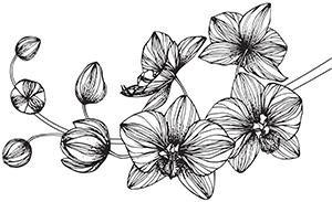 ilustracja-orchidea 8
