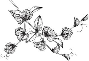 ilustracja-slodki-groszek-2 1