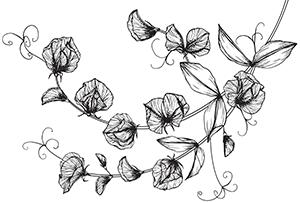 ilustracja-slodki-groszek 1
